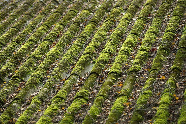 enlever la mousse sur les terrasses, sols & toitures | starwax
