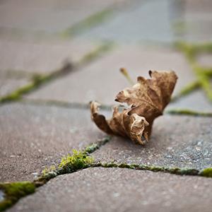 Comment se d barrasser des mousses sur un mur ou une for Enlever la mousse sur les murs